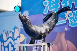 动物出租动物展览动物表演动物租赁价格