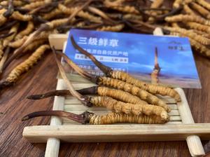 御草集冬虫夏草:高海拔冬虫夏草终于开始销售了,日期定在5月20号