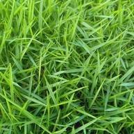 边坡绿化方式有哪几种?
